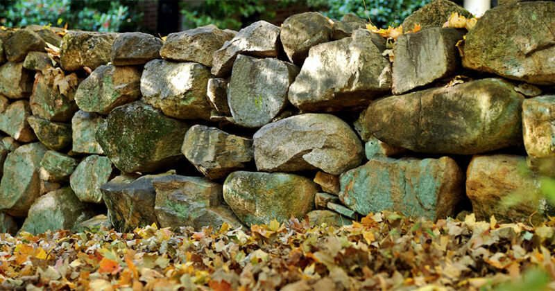 A close view of a mossy stone wall